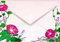 envelope morningglory